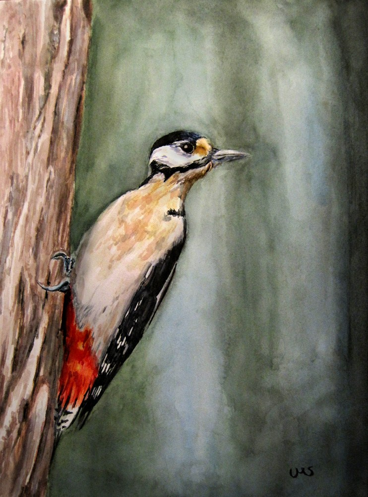 """Great Spotted Woodpecker"" original fine art by Ulrike Miesen-Schuermann"