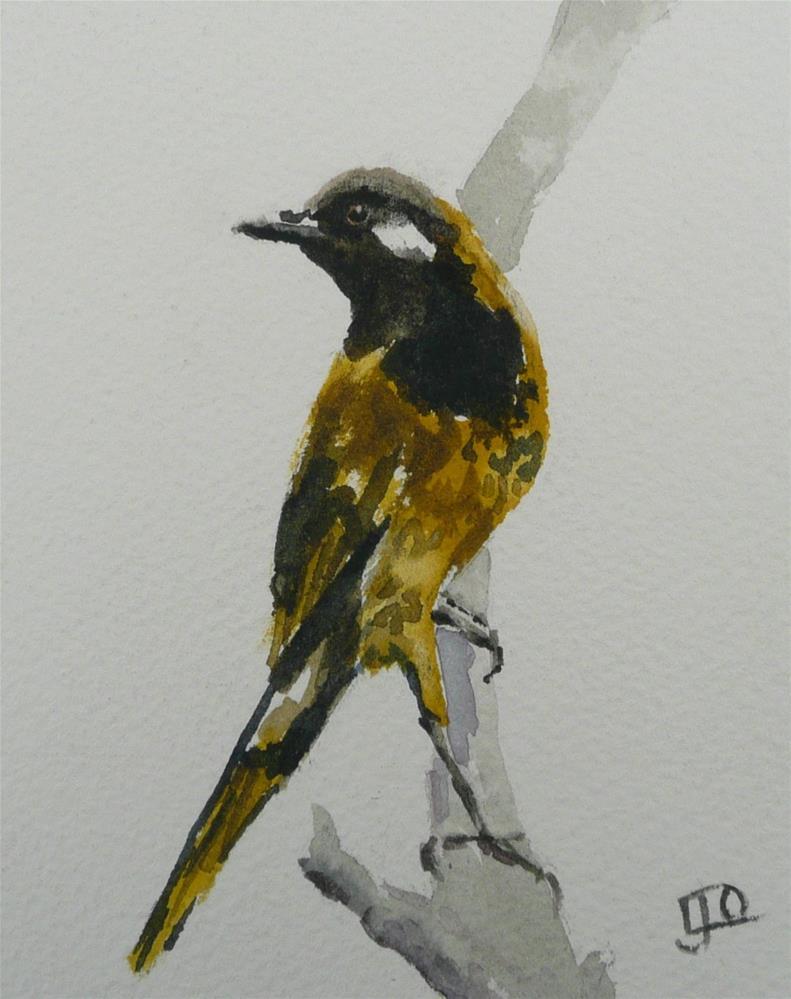 """""""White-eared Honeyeater"""" original fine art by Leanne Owen"""