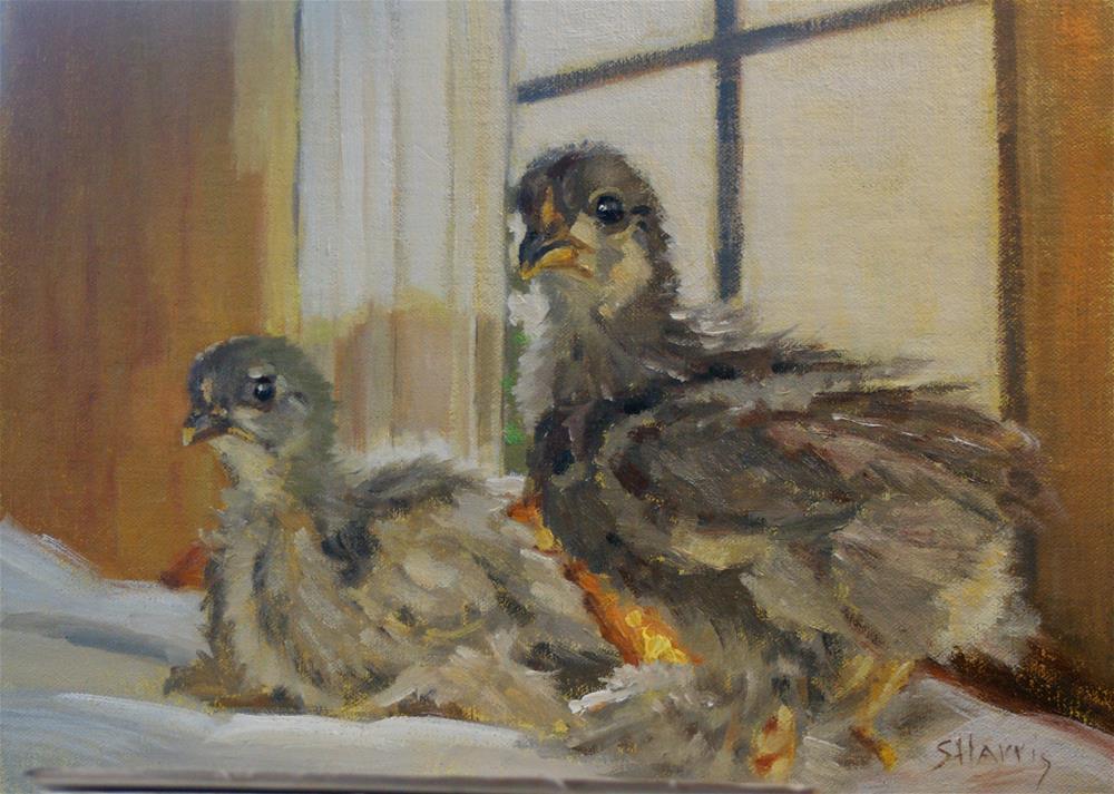 """Chick Chick"" original fine art by Sandra L Harris"
