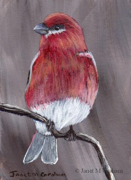 """Pine Grosbeak ACEO"" original fine art by Janet Graham"