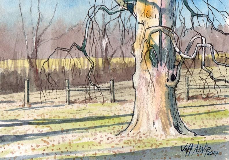 """Tennessee Catalpa"" original fine art by Jeff Atnip"