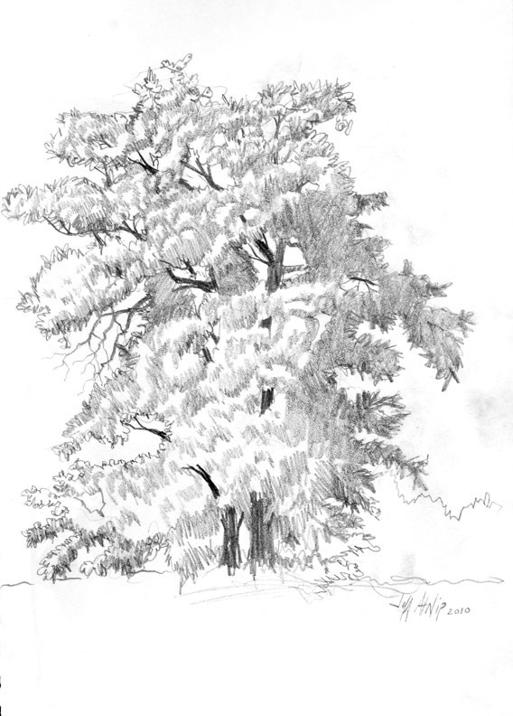 """Tullahoma Tree"" original fine art by Jeff Atnip"