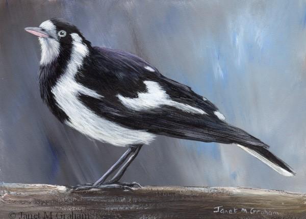 """Magpie Lark (Peewee)"" original fine art by Janet Graham"