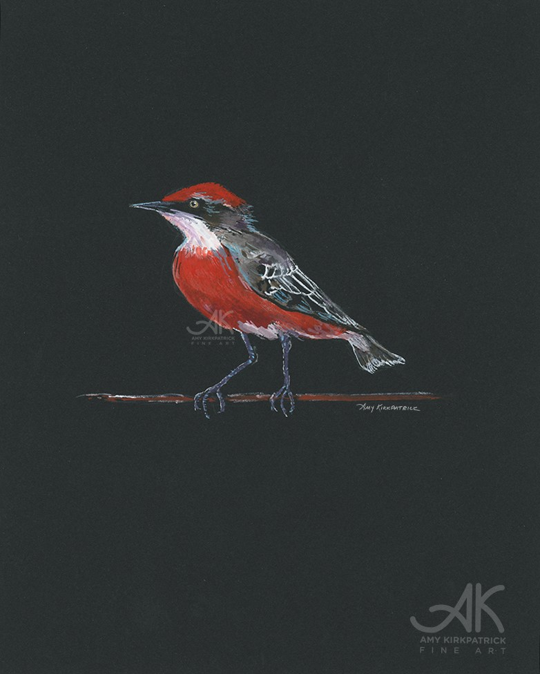 """""""RED CRIMSON LOOKS TO HIS RIGHT #0675"""" original fine art by Amy Kirkpatrick"""
