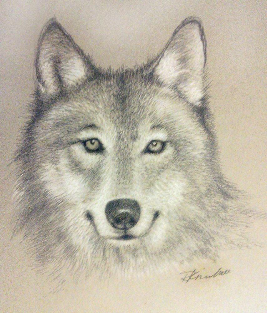 """A Gray Wolf"" original fine art by Bob Kimball"