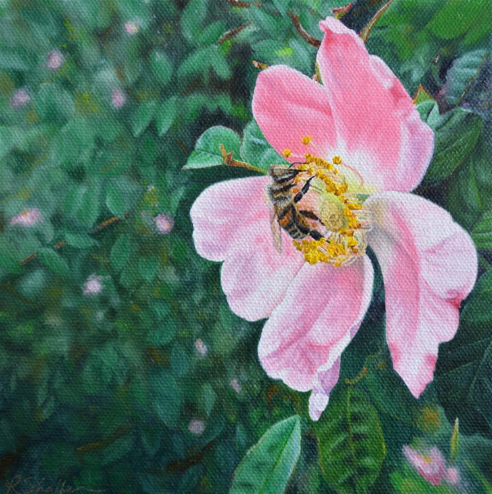"""Bee on a wild rose, study"" original fine art by Renay Shaffer"