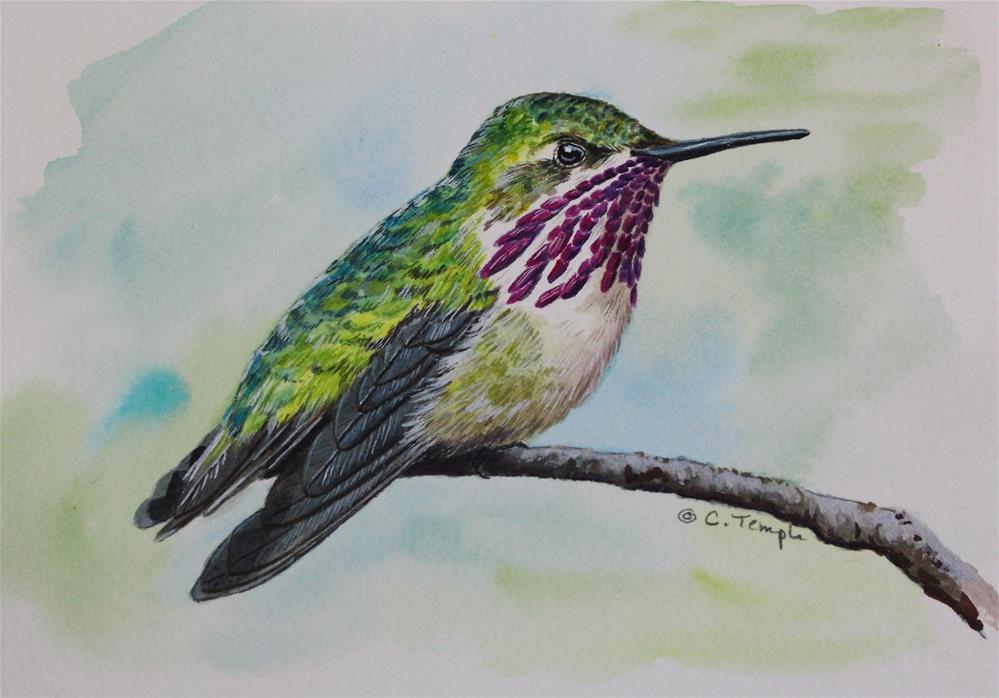 """Calliope Hummingbird"" original fine art by Catherine Temple"