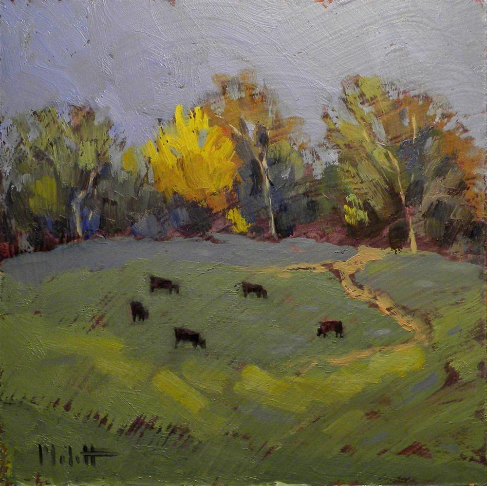 """Black Angus Cows Hillside Autumn Landscape Daily Painting"" original fine art by Heidi Malott"
