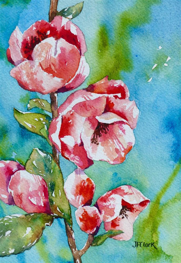 """Quince Blossoms"" original fine art by Judith Freeman Clark"