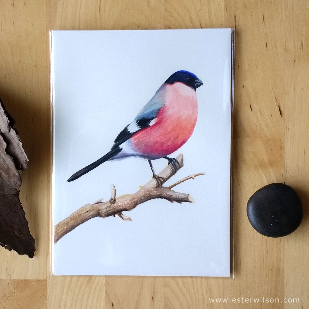 """European Bullfinch"" original fine art by Ester Wilson"