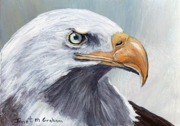 """Bald Eagle ACEO"" original fine art by Janet Graham"