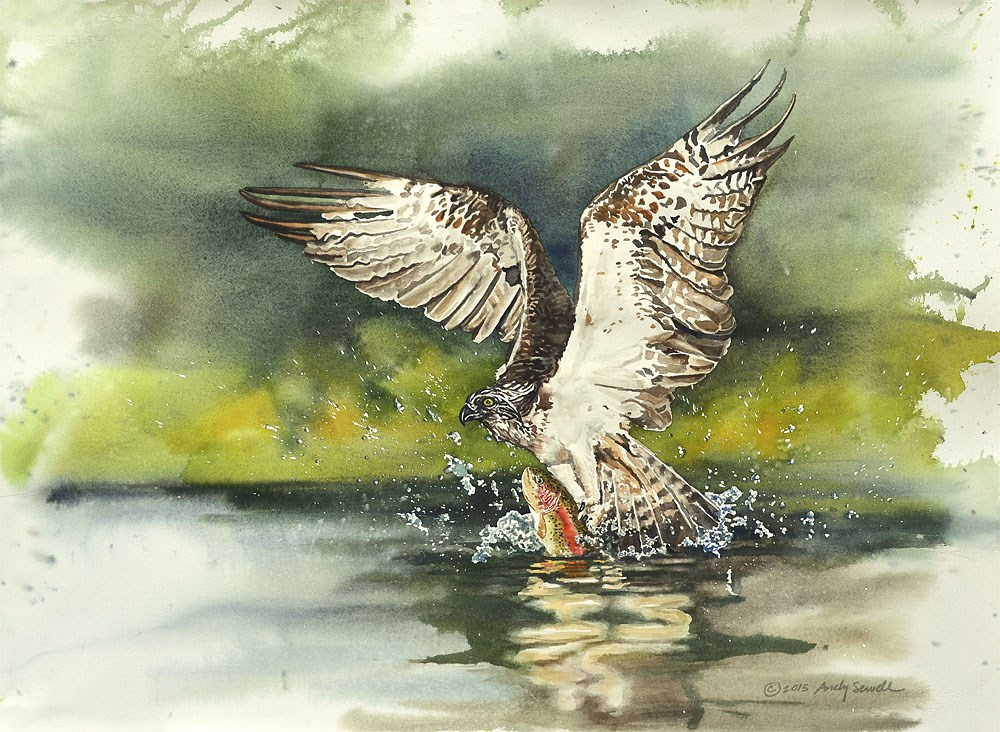 """""""Seahawk Attack"""" original fine art by Andy Sewell"""