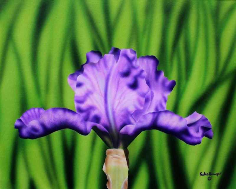 """""""Lavender Iris"""" original fine art by Fred Schollmeyer"""