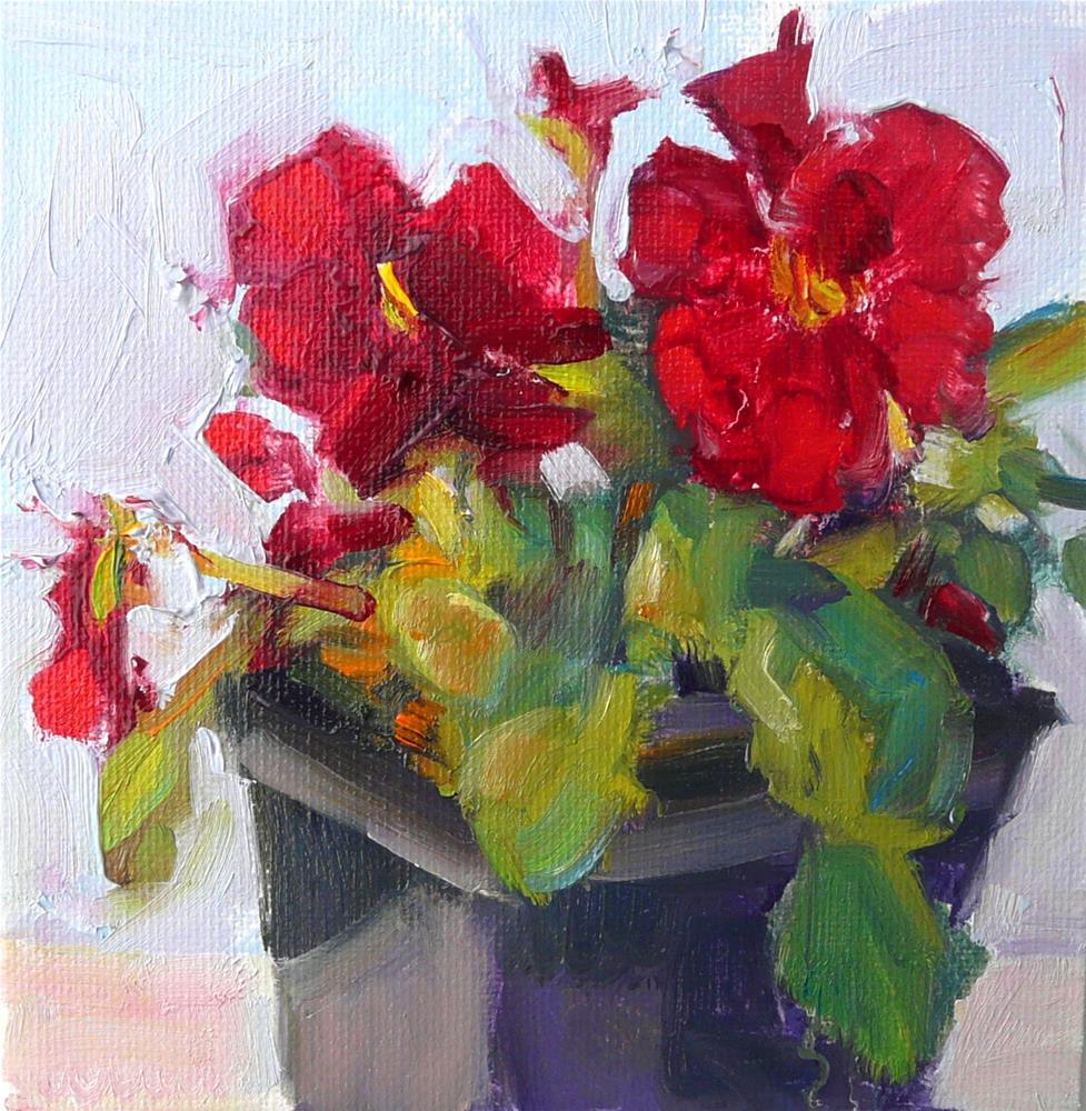 """Happy Red Pansy,still life,oil on canvas,6x6,price$200"" original fine art by Joy Olney"