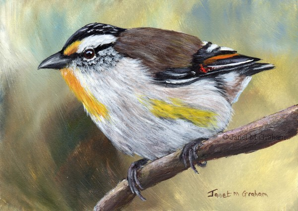 """Striated Pardalote"" original fine art by Janet Graham"