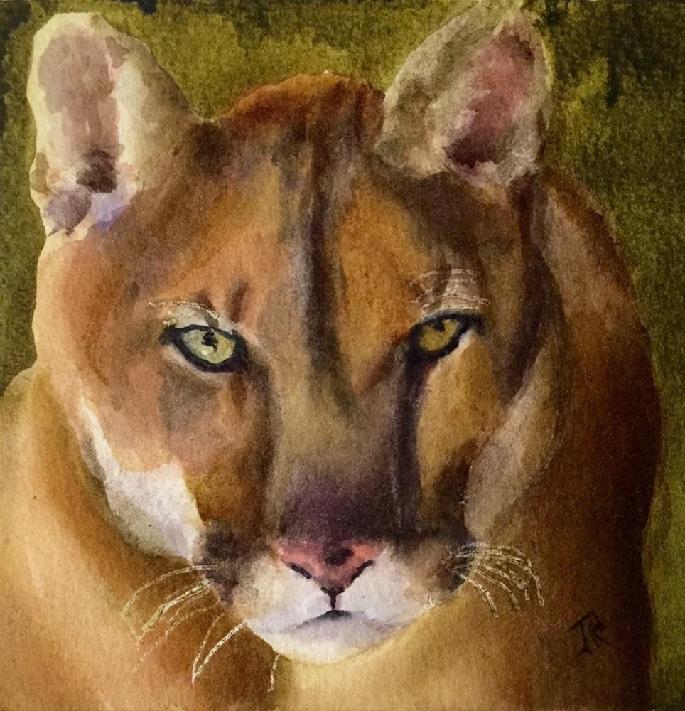 """Mountain Lion"" original fine art by June Rollins"