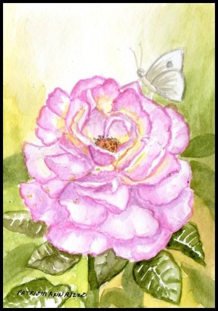 """A Fresh new Garden Rose"" original fine art by Patricia Ann Rizzo"