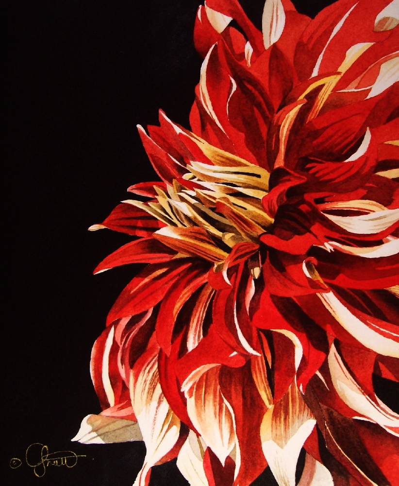 """Red & White Dahlia"" original fine art by Jacqueline Gnott, TWSA, WHS"