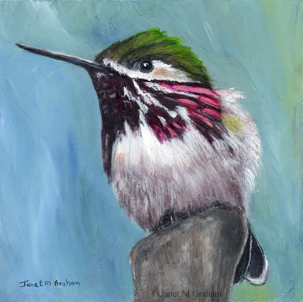 """Calliope Hummingbird"" original fine art by Janet Graham"
