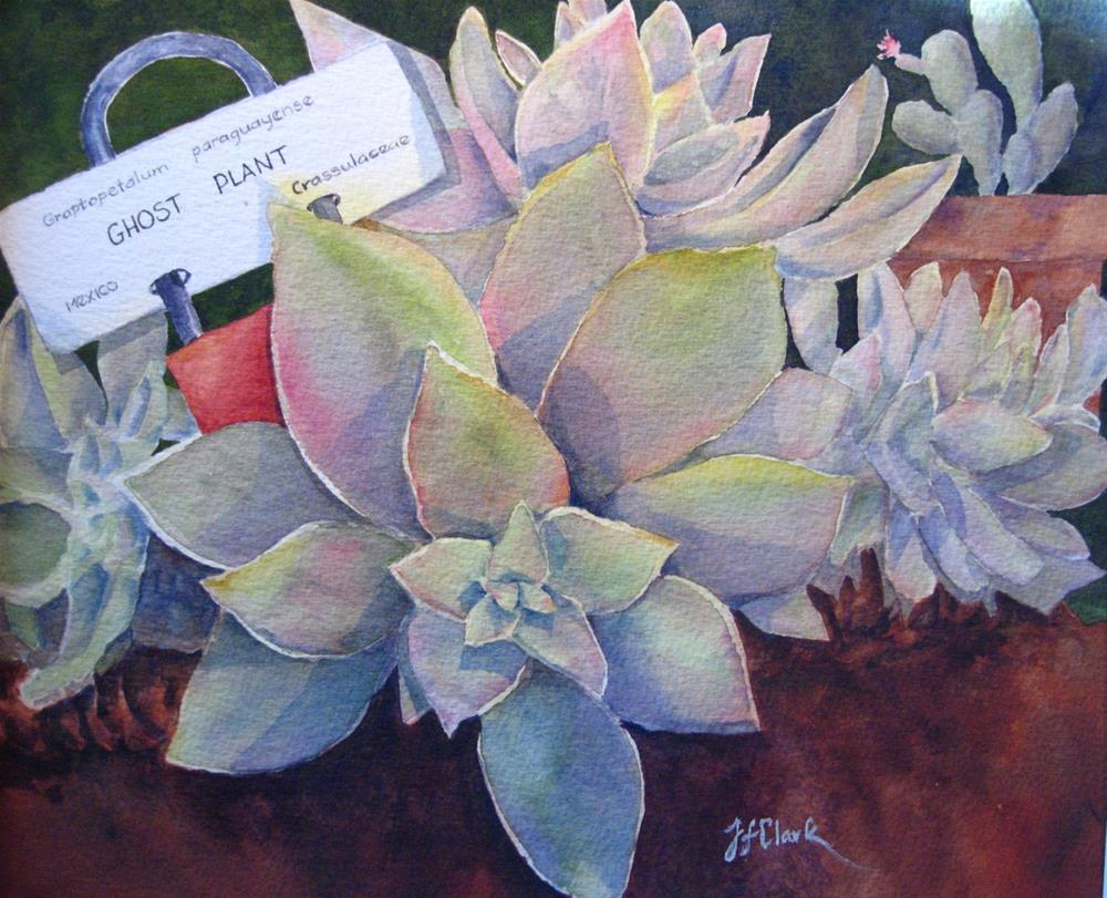 """Ghost Plant"" original fine art by Judith Freeman Clark"