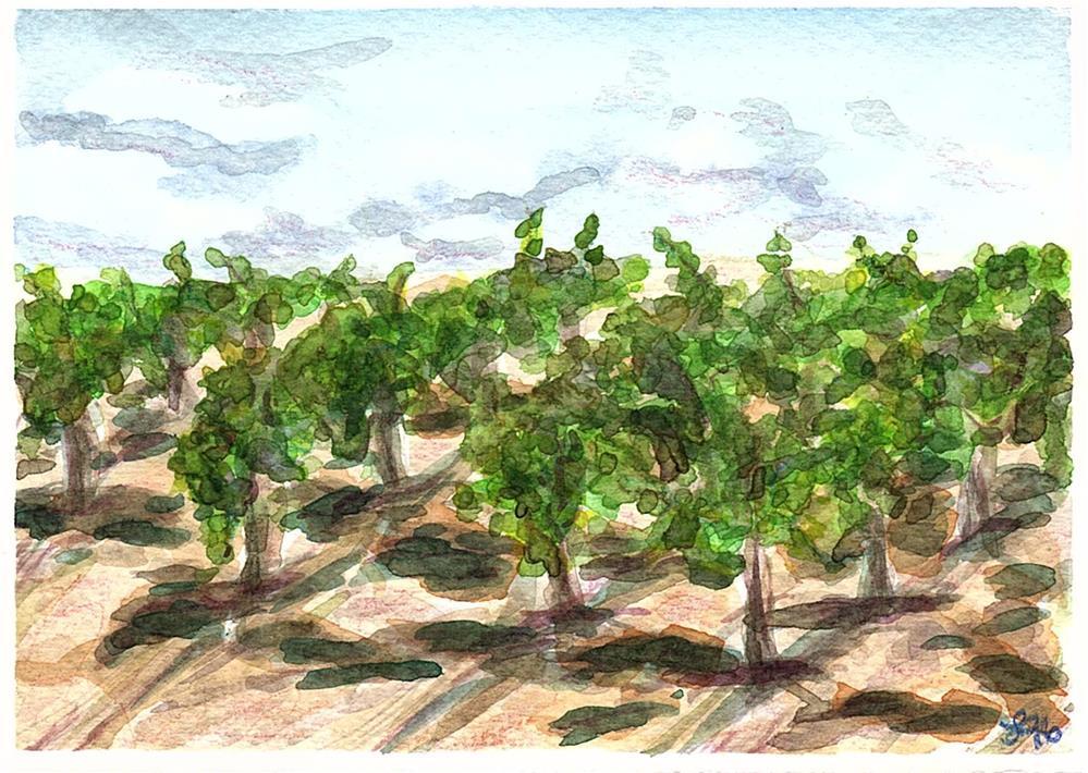 """Marisa's Vineyard"" original fine art by Laura Denning"
