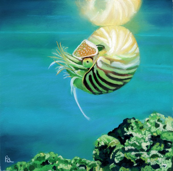 """Nautilus"" original fine art by Ria Hills"