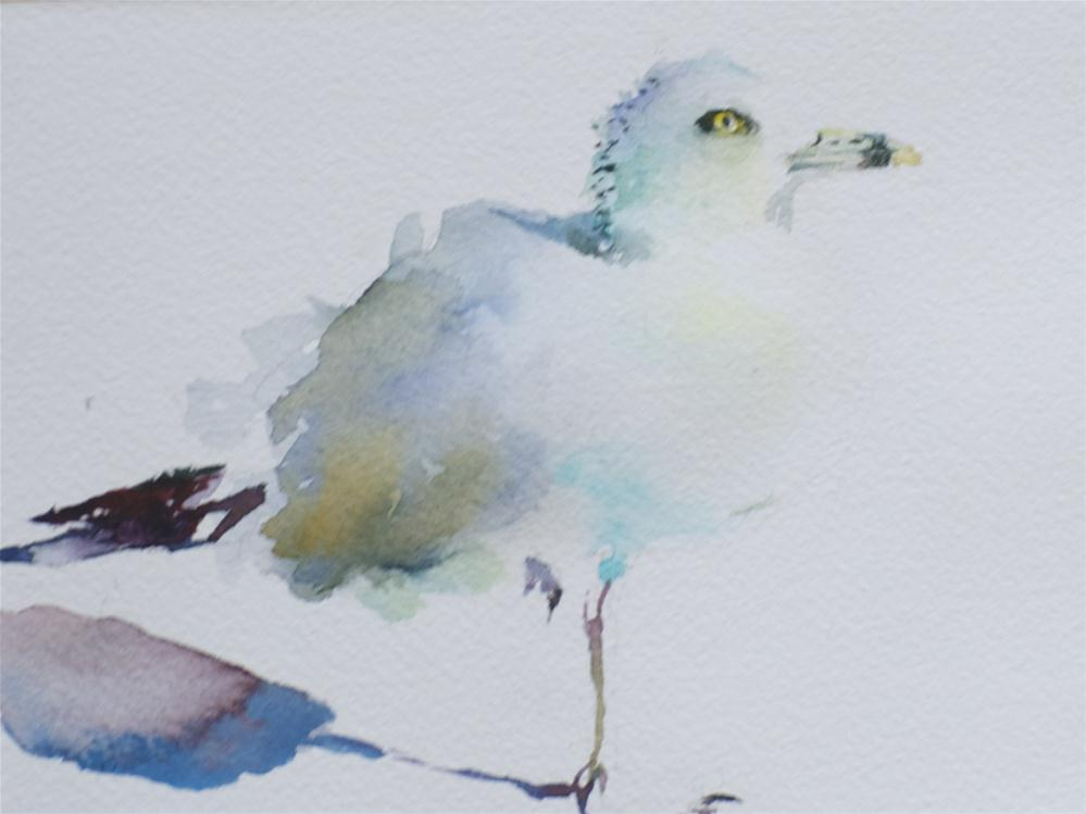 """HH Seagull"" original fine art by Sue Churchgrant"