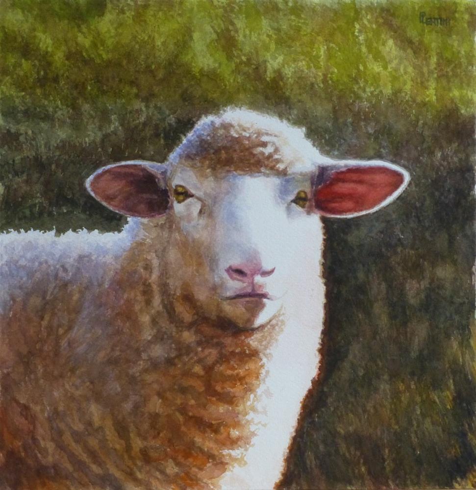 """Sheep Series 2: Early December"" original fine art by Peter Lentini"