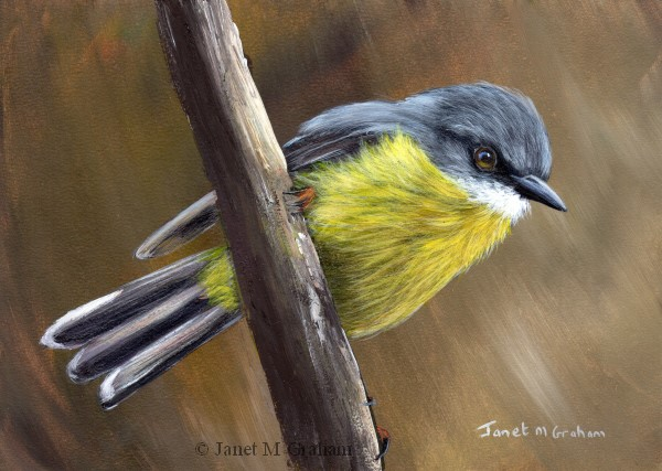 """Eastern Yellow Robin No 4"" original fine art by Janet Graham"