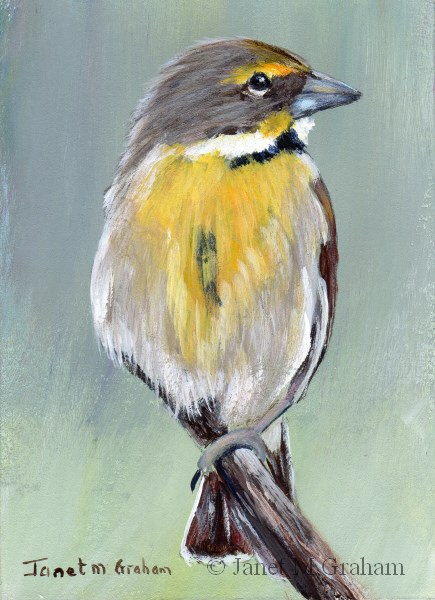 """Dickcissel ACEO"" original fine art by Janet Graham"