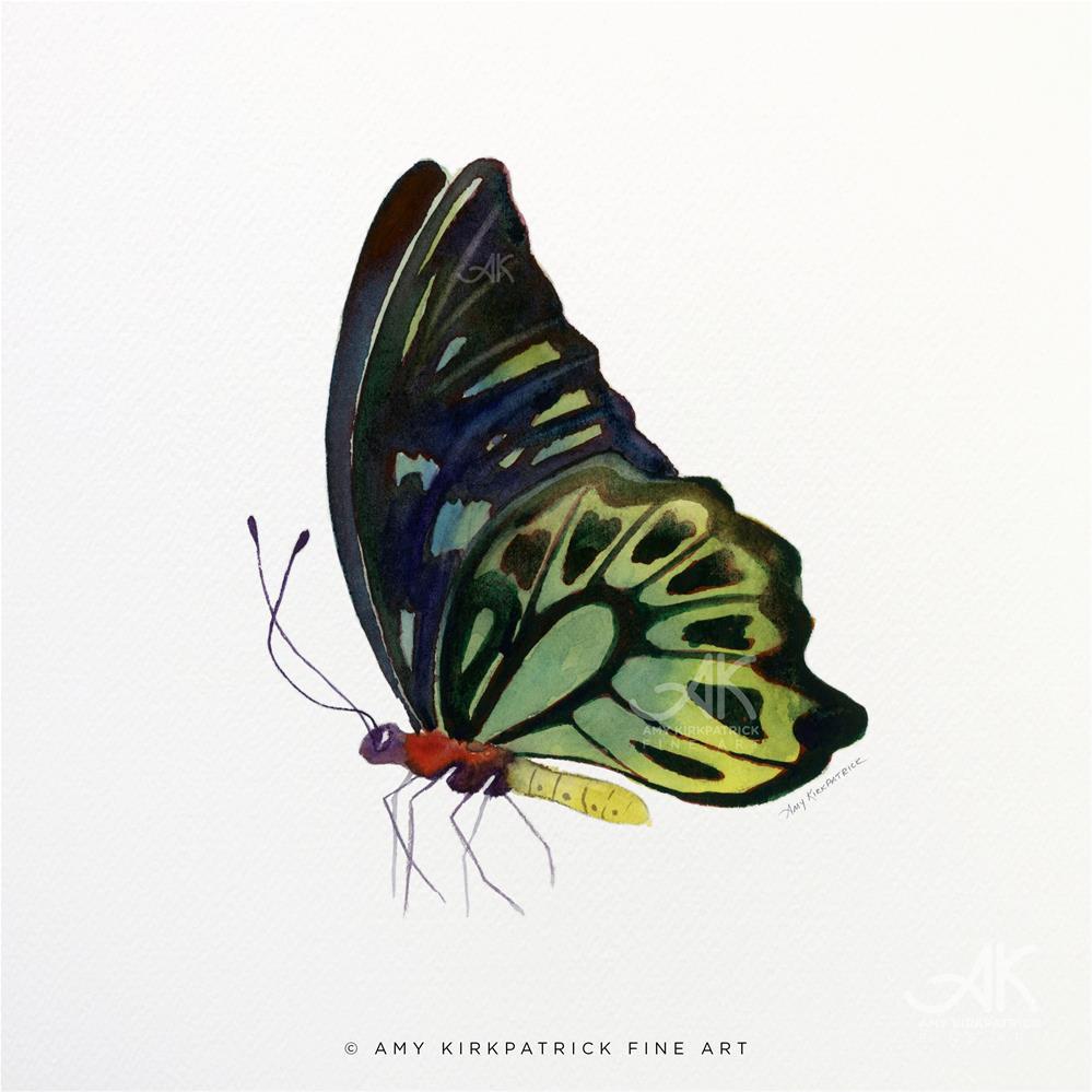 """""""#97 Perched Kuranda Butterfly #0407"""" original fine art by Amy Kirkpatrick"""