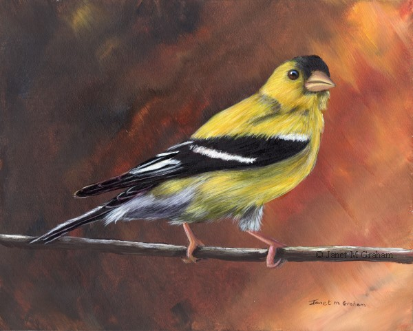 """American Goldfinch No 4"" original fine art by Janet Graham"