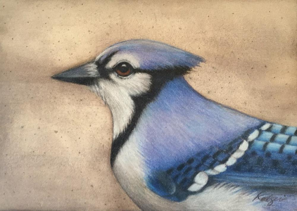 """Blue Jay"" original fine art by Juli Rodgers"
