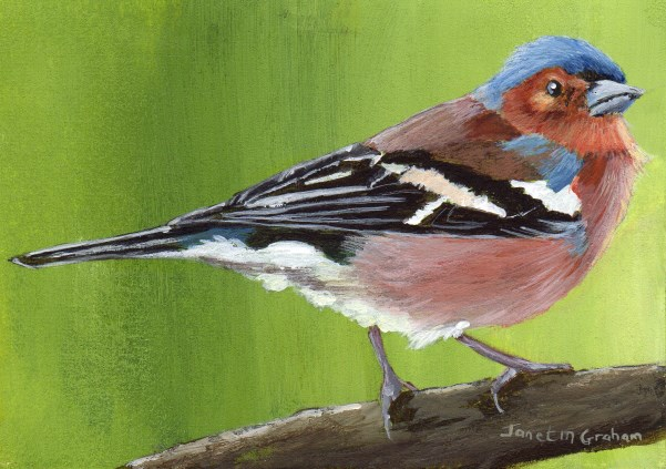 """""""Chaffinch ACEO"""" original fine art by Janet Graham"""