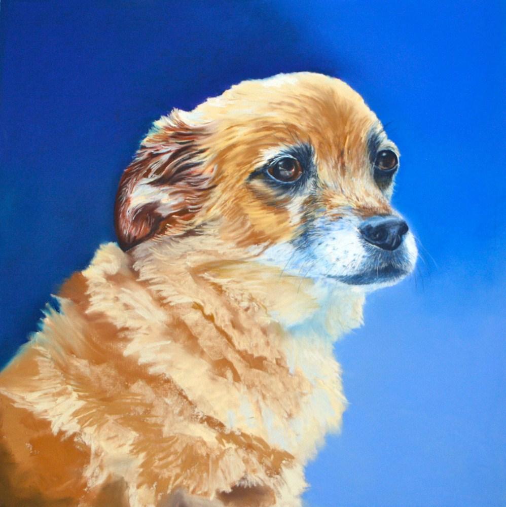 """""""Buster"""" original fine art by Jill Bates"""