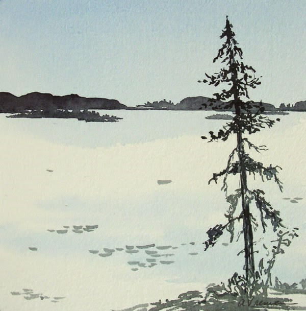 """Black Spruce"" original fine art by Anna Vreman"
