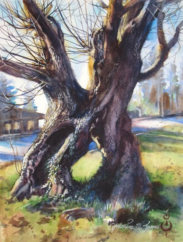 """The Elder"" original fine art by Catherine M. James"