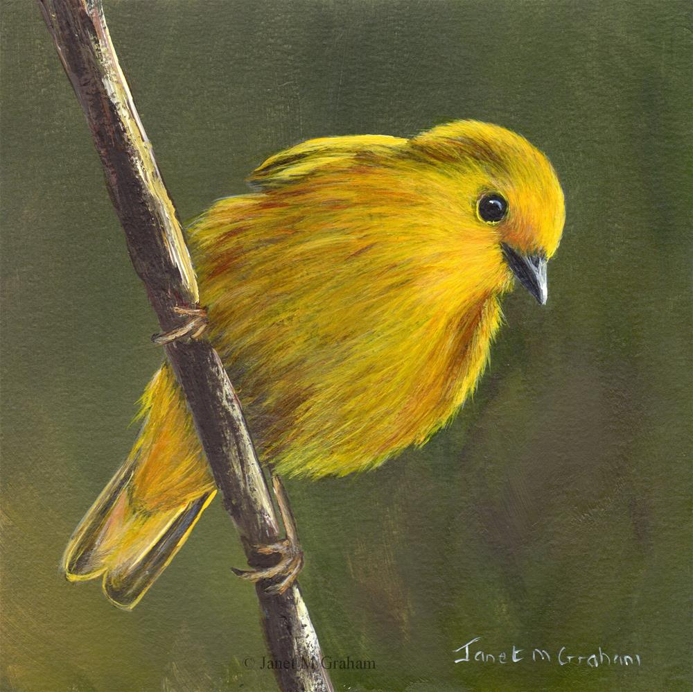 """Yellow Warbler No 3"" original fine art by Janet Graham"