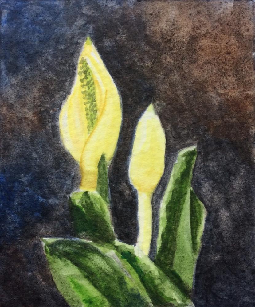 """Skunk Cabbage Blossom"" original fine art by Jenny Kinberg"