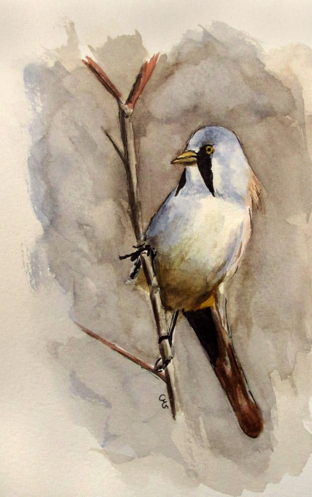"""Bearded Reedling"" original fine art by Ulrike Miesen-Schuermann"