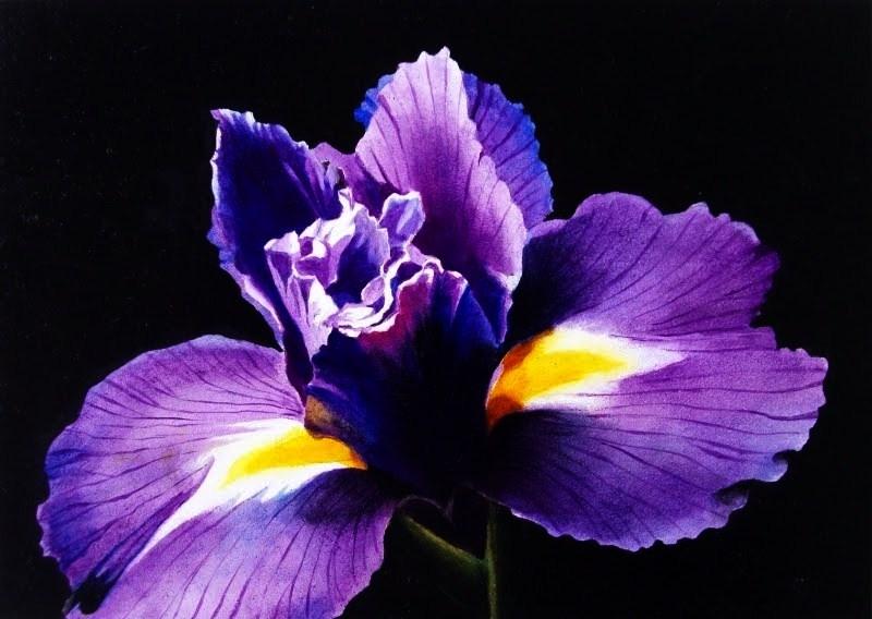 """Purple Iris on Black - Watercolor"" original fine art by Jacqueline Gnott, TWSA, WHS"