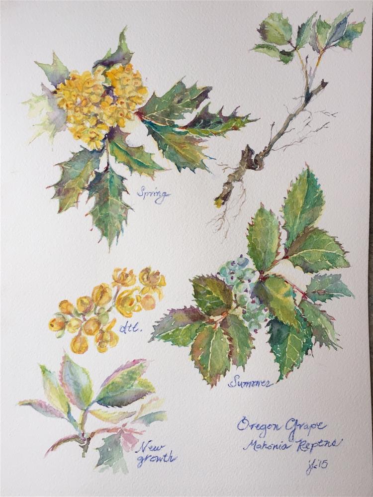 """Oregon Grape, Mahonia repens"" original fine art by Jean Krueger"