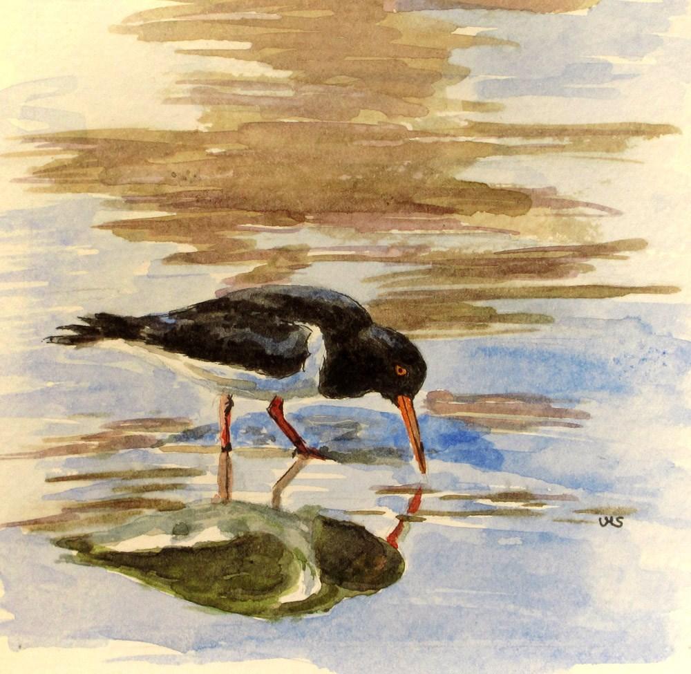 """""""Oyster Catcher"""" original fine art by Ulrike Miesen-Schuermann"""