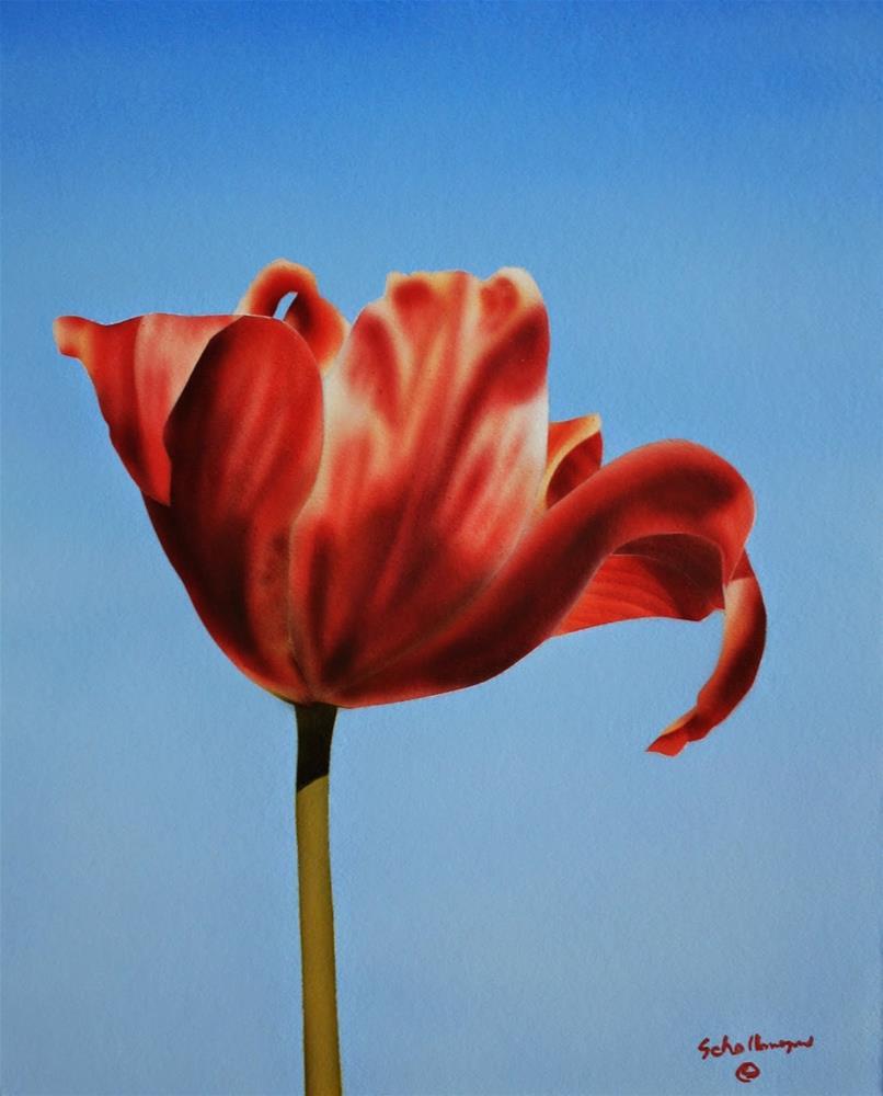 """Morningside Tulip"" original fine art by Fred Schollmeyer"