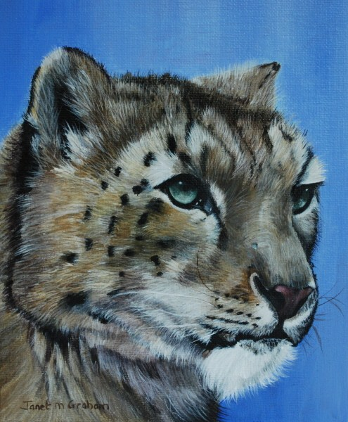 """Snow Leopard"" original fine art by Janet Graham"