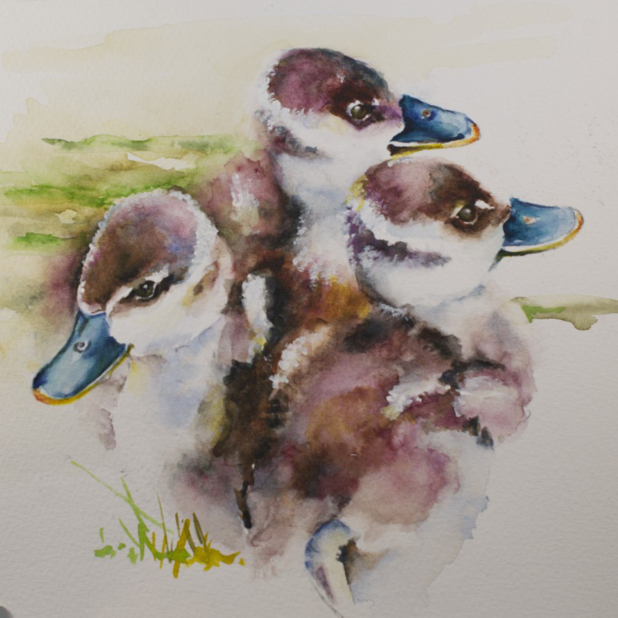 """Blue billed Ducklings"" original fine art by Sue Churchgrant"