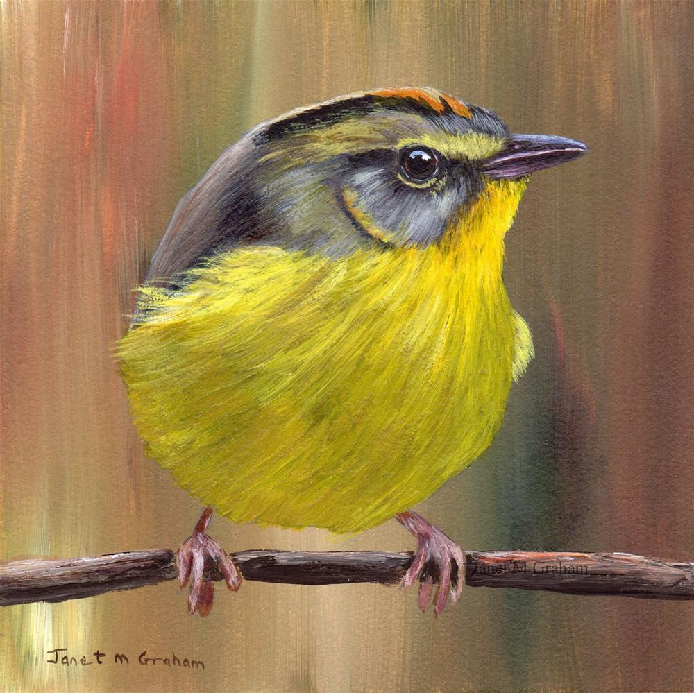 """""""Golden Crowned Warbler"""" original fine art by Janet Graham"""