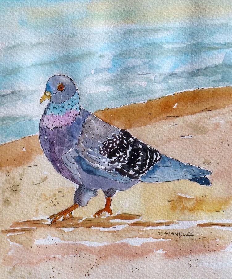 """The Pigeon 13085 SOLD 12/31/2013"" original fine art by Nancy Standlee"