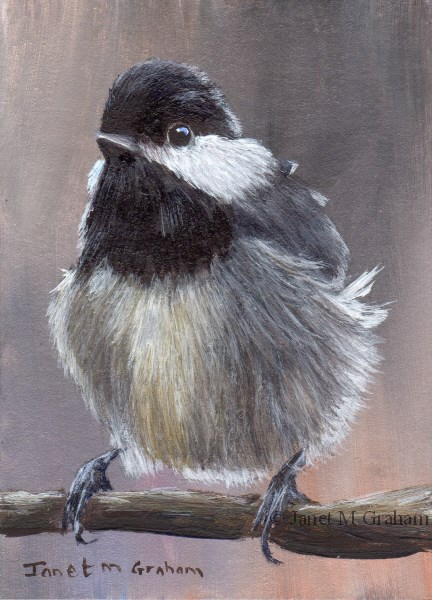 """Mexican Chickadee ACEO"" original fine art by Janet Graham"
