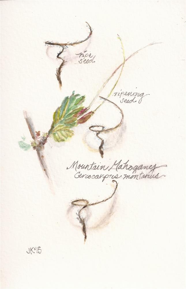 """Mountain Mahogany"" original fine art by Jean Krueger"